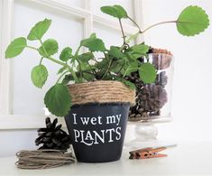 Funny plant pot. I wet my plants. Funny Plant pun potter. Succulent Planter. Indoor Planter. Cactus Pot. Plant Pun. Funny Christmas gifts. by Rustic86 on Etsy