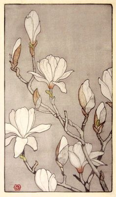 magnolias by E., Colored Woodcut on antique-white Japanese hosho magnolias by E., Colored Woodcut on antique-white Japanese hosho Botanical Drawings, Botanical Illustration, Botanical Prints, Illustration Art, Illustrations, Arte Floral, Silk Painting, Watercolor Flowers, Drawing Flowers