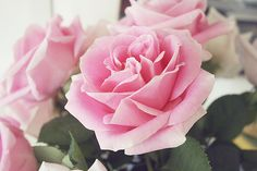 roses by pearled, via Flickr