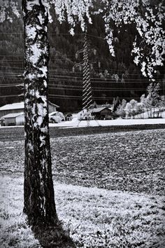 BWSTOCK.PHOTOGRAPHY  //  #agricultural #landscape #birch #high-voltage-column Black White Photos, Black And White, High Voltage, Free Black, Birch, Landscape, Plants, Photography, Outdoor