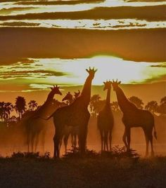 Oooh giraffe. I love giraffes..