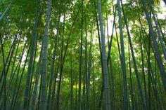 Comunidade Cristã Monte Libano: O bambuzal