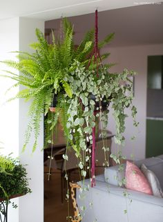 12-decoracao-apartamento-varanda-integrada-cortina-plantas-samambaia