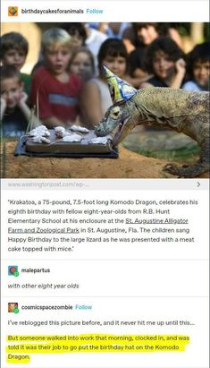Animal Memes, Funny Animals, Cute Animals, Funny Lizards, Animal Humor, Funny Cute, The Funny, Hilarious, Tumblr Funny