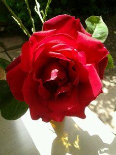 Rosa en vaso de cristal