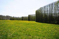 C. Th. . Sørensen - Buscar con Google Modern Landscape Design, Landscape Architecture Design, Modern Landscaping, Landscape Art, Landscape Architects, Plant Design, Garden Design, Garden Hedges, Modern Pools
