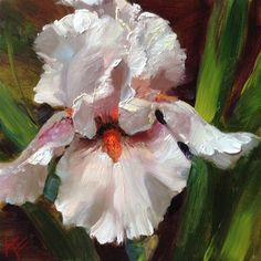 """Daily Paintworks - """"~Blushing Bride - Tall bearded..."""" by Krista Eaton"""