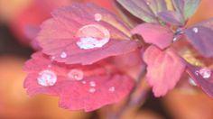 Raindrops Falling From Leaves by Andrase.deviantart.com on @deviantART