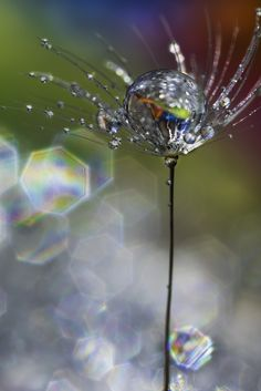 ~~Transparent | water drop on dandelion macro | by ASPhotographic~~