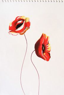 Red poppy, touch marker sketch
