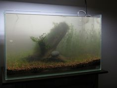 For newcomers to the fishkeeping hobby there are many mistakes that can be made during the process of researching and actually setting up your fish tank. This article will describe the most common mistakes and how to avoid them. It covers every part of the process of setting up an aquariumto hopefullymake life a lot easier for novice fish keepers. Avoiding the mistakes from day one is far easier than trying to rectify them at a later date! This article is a guest post by Jan from…