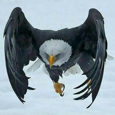 Looks like bat Eagle!