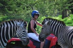 If you like to be active while on holiday, Mauritius has many great attractions to visit. At Casela Nature and Leisure Park in the west, you can come face to face with zebras, ostriches and deer on a quad or Segway safari, or opt for ziplining across treetops. In the east Domaine de L'Etoile offers quad and buggy tours through sugar cane fields and along the mountain paths, horseback-riding and also has a great mini-adventure park for the kids.