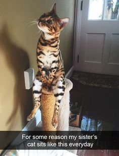 10+ Hilarious Cat Snapchats That Are Im-paw-sible Not To Laugh At
