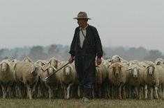 De herder en zijn staf