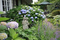 hydrangeas front yard landscaping   Landscape Architects & Designers
