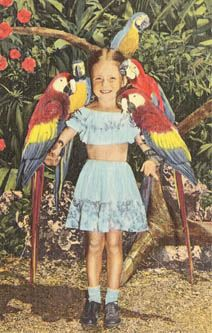 A young girl poses with several parrots in this 1940s postcard from Parrot Jungle in Florida.