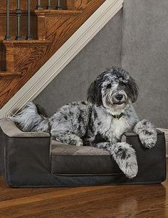 With a faux leather exterior and plush cushion, the Dorset Quilted Pet Bed is a stylish and comfortable bed for your pet that won't sacrifice your home's style.