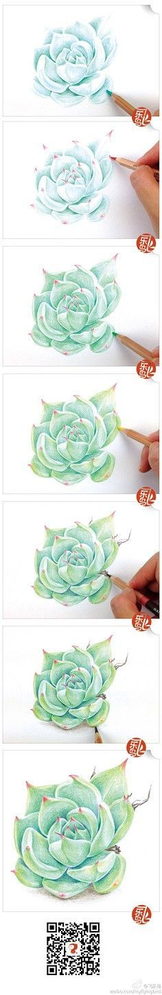 Drawing of a succulent in colored pencil: