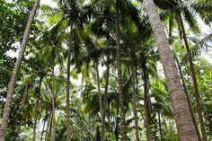 11/30(水)バリ島ウブドのお天気は曇り。室内温度27.7℃、湿度73%。ゴロゴロと空が唸り、そろそろ雨??これから年末にかけてはジャンジャン雨が降るかもしれませんね。