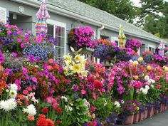 Flowers outside Weiss Paradise Suites in Seaside, Oregon Seaside Lodge, Seaside Oregon, Seaside Beach, Paradise Flowers, Vacation Rentals, Vacations, She Sheds, Flowers Nature, Trees To Plant