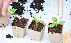 Fra vuggestue til børnehave, lær om omplantning Grow Your Own, Plant