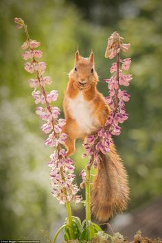 Acrobatic squirrel breaks out into the splits as he balances on two branches | Daily Mail Online