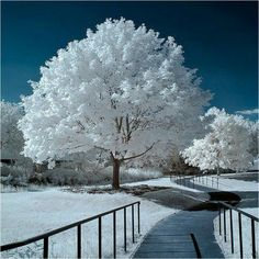 Inspiration For Landscape photography Picture Description A Showcase of 20 Absolutely Amazing Landscape infrared Photography… Winter Szenen, I Love Winter, Winter Magic, Winter Time, Alaska Winter, Winter Walk, Tree Photography, Landscape Photography, Infrared Photography