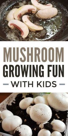 Now is a great time to try out gardening at home! Kids gardening ideas - simple mushroom growing at home is a great way to explore plant science and propagation with kids Grow Your Own Mushrooms, Growing Mushrooms At Home, Garden Mushrooms, Montessori Baby, Science For Kids, Activities For Kids, Science Activities, Science Experiments, Outdoor Activities