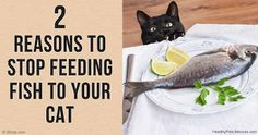 1000 images about pet food brands and treats to avoid on for Fish based dog food
