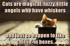 Cats are magical http://cheezburger.com/9079380992