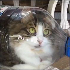 CAT GIF • When your crazy Cat thinks he is water in a bottle because Cats are liquid