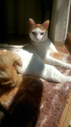 My cat - Mingau