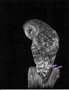 scratchboard art   Scratchboard Barn Owl by ~DelphinusArt on deviantART