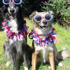Cutest Patriotic Animals and Pets | List of Patriotic Animal Pictures