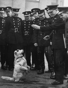 Spot the Terrier - Members of L Section of the AFS (Auxiliary Fire Service) from London offer titbits of food to Spot, a stray terrier they adopted as their official mascot.  (21st March 1941)