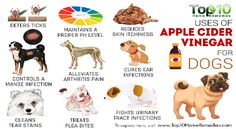 Apple Cider Vinegar For Dog