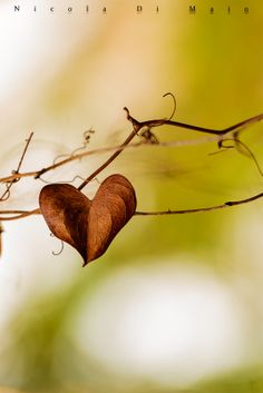 / Photo Nature love 3 by nicola di maio I Love Heart, With All My Heart, Happy Heart, Heart Pictures, Heart Images, Cool Pictures, Heart In Nature, Heart Art, Love Symbols