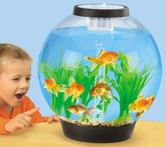Easy-View Classroom Aquarium at Lakeshore Learning