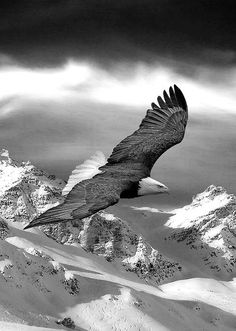 Eagles Wallpapers for Desktop Pixels Talk Eagle Images Eagle Images, Eagle Pictures, Pictures Images, Beautiful Birds, Animals Beautiful, Mountain Wallpaper, Tier Fotos, Birds Of Prey, Beautiful Creatures