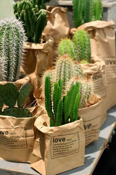 Jardins Mais The market in cactus house plants is booming and with very good reason. These prickly little guys are great fun, easy to keep and very attractive. Decoration Plante, Plants Are Friends, Deco Floral, Cactus Y Suculentas, Green Life, Brown Paper, Green Plants, Cacti And Succulents, Indoor Plants