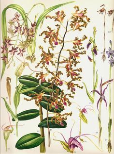 Vintage Flower Print 1970 Art Print Wild by NaturalistCollection, $3.00