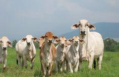 Uruguay: Cumbre de salud animal aportó información de enfermedades