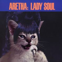Kitten version of Aretha Franklin.  (Yes, there's a whole web site where kittens re-enact classic rock album covers!) :)