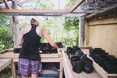 Planting seedlings in the nursery A mix of millet sorghum forest flame (delonix regia) cacao coffee carob papaya moringa and a variety of hot chili peppers will soon be making their way into the garden beds at @goodearthfarmbali : @brianaautran  #seedlings #planting #starthere #garden #permaculture #smallfarm #farmtotable #sustainableliving #think green #organic #nature #goodlife #farm #balifarm #workaway #community #goodearthfarmbali #ubud #balikpapan
