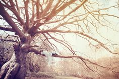 The Dreamers Tree - Photography by Sarah Ann Wright  <3 <3