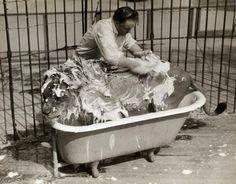 big kitty taking bath
