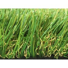 Greenline Sapphire 50 Fescue Artificial Grass Synthetic Lawn Turf Carpet for Outdoor Landscape 15 ft. x Custom Length Artificial Grass Carpet, Artificial Turf, Fescue Grass, Lawn Turf, Synthetic Lawn, Indoor Outdoor Carpet, Fake Grass, Thing 1, Courtyards
