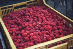 freshly picked raspberries from Chegworth Valley What To Cook, Raspberries, Tasty Dishes, Fresh, Cooking, Food, Kitchen, Essen, Raspberry