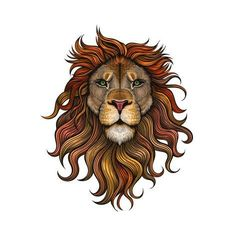 Art Print: Vector Color Lion Illustration by Julia Waller : 12x12in